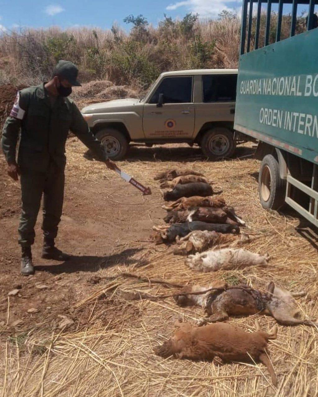 """Guárico: Detienen a 5 sujetos por el delito de envenenamiento """"masivo de mascotas""""(+video) - febrero 20, 2021 9:46 pm - NOTIGUARO - Nacionales"""