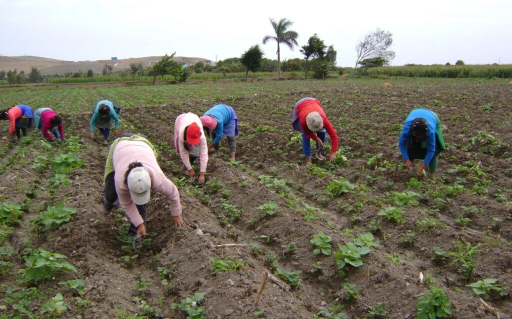 Lara: Productores de Torres paralizados por falta de combustible - junio 19, 2021 11:05 am - NOTIGUARO - Locales