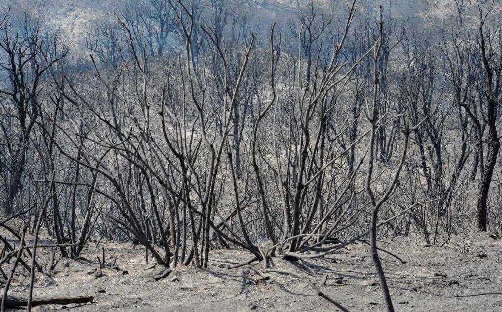 Más de 70 muertos en los incendios del norte de Argelia - agosto 13, 2021 6:25 am - NOTIGUARO - Internacionales