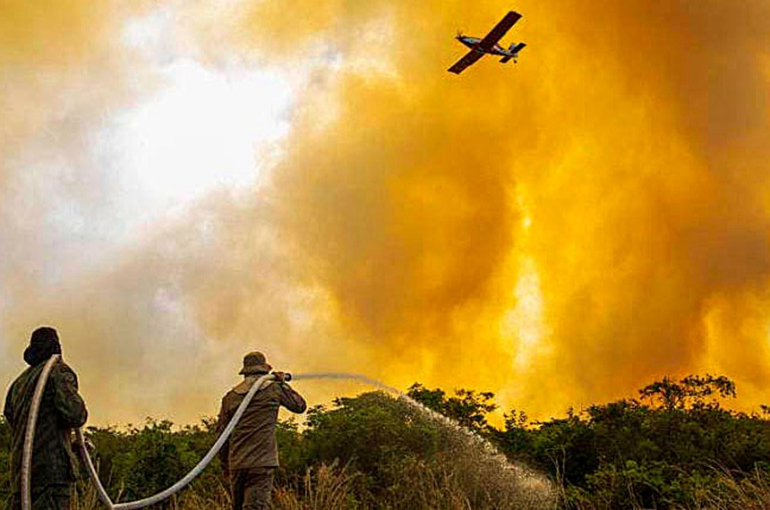 En Pantanal brasileño: Biodiversidad amenazada por incendios - septiembre 7, 2021 1:00 pm - NOTIGUARO - Internacionales